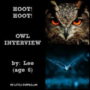 OWL INTERVIEW