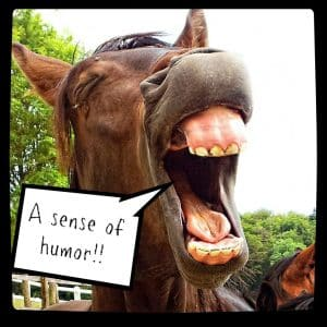 A sense of humor!