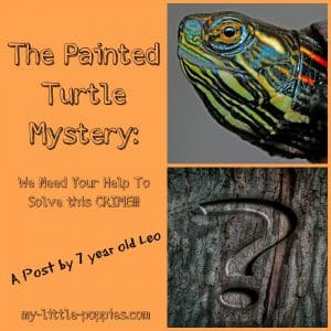 The Painted Turtle Mystery