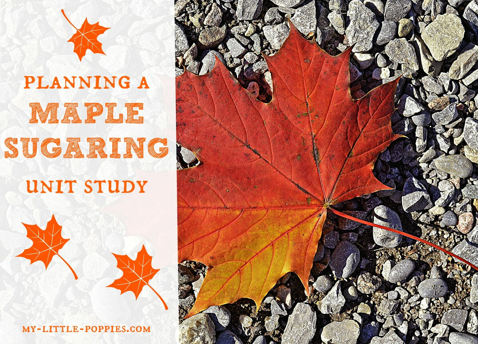 planning a maple sugaring unit study my little poppies