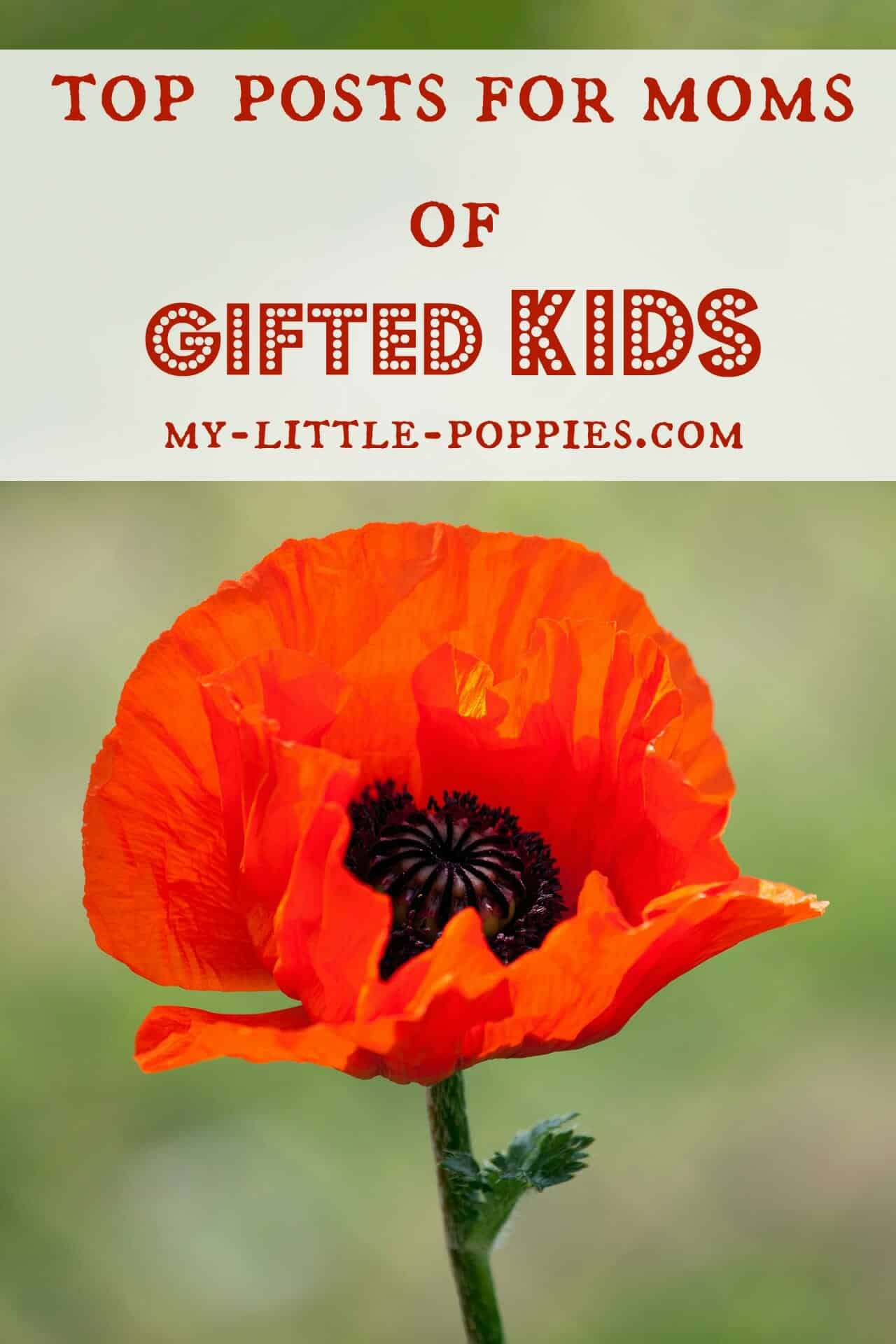 top 10 posts for moms of gifted kids my little poppies
