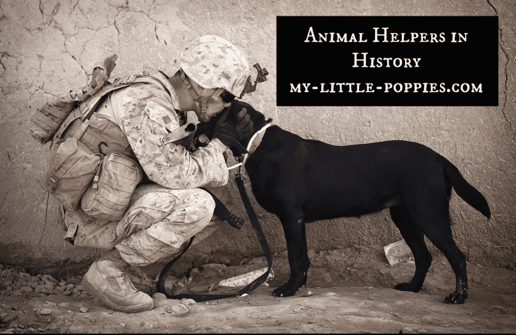 Animal Helpers in History