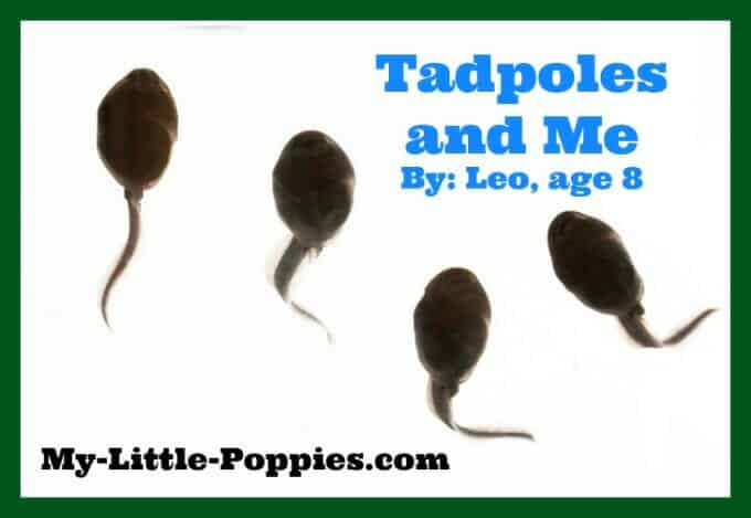 Tadpoles and Me (A post by Leo, age 8)
