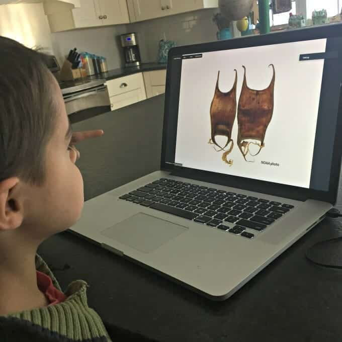 10 Practical Reasons Why You Need Virtual Field Trips in Your Life   My Little Poppies, fieldtripzoom