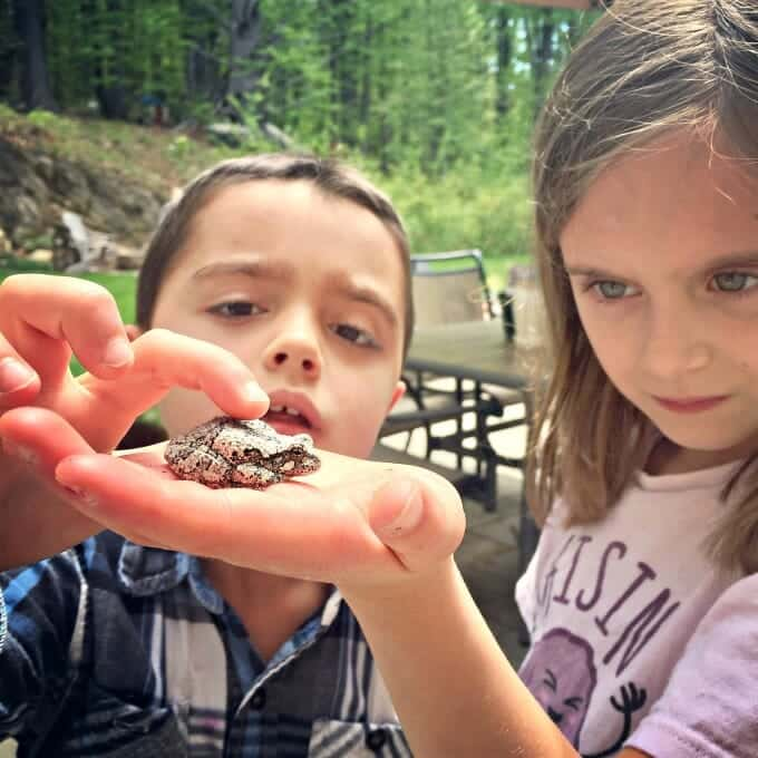 Simple Summer Learning with '100 Backyard Activities That Are the Dirtiest, Coolest, Creepy-Crawliest Ever!' by Colleen Kessler | My Little Poppies