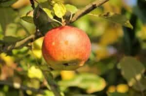 apple-200331_1280
