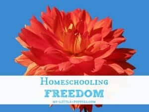 Homeschooling Freedom
