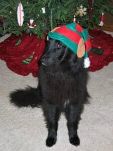 Christmas 2007 006