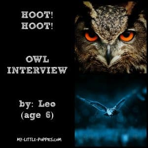 OWL INTERVIEW