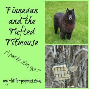 Finnegan and the Tufted Titmouse