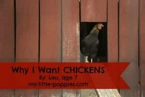 Why I Want CHICKENS