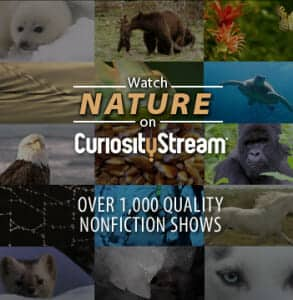 NatureMontage, CuriosityStream, video, streaming, nonfiction, homeschool, education, science, nature, documentary, subscription, service