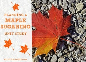 Planning a Maple Sugaring Unit Study