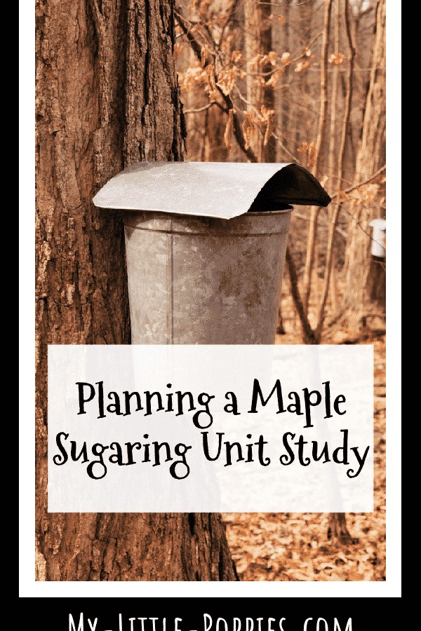 Planning a Maple Sugaring Unit Study | My Little Poppies