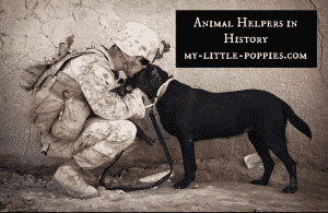 Animal Helpers in History