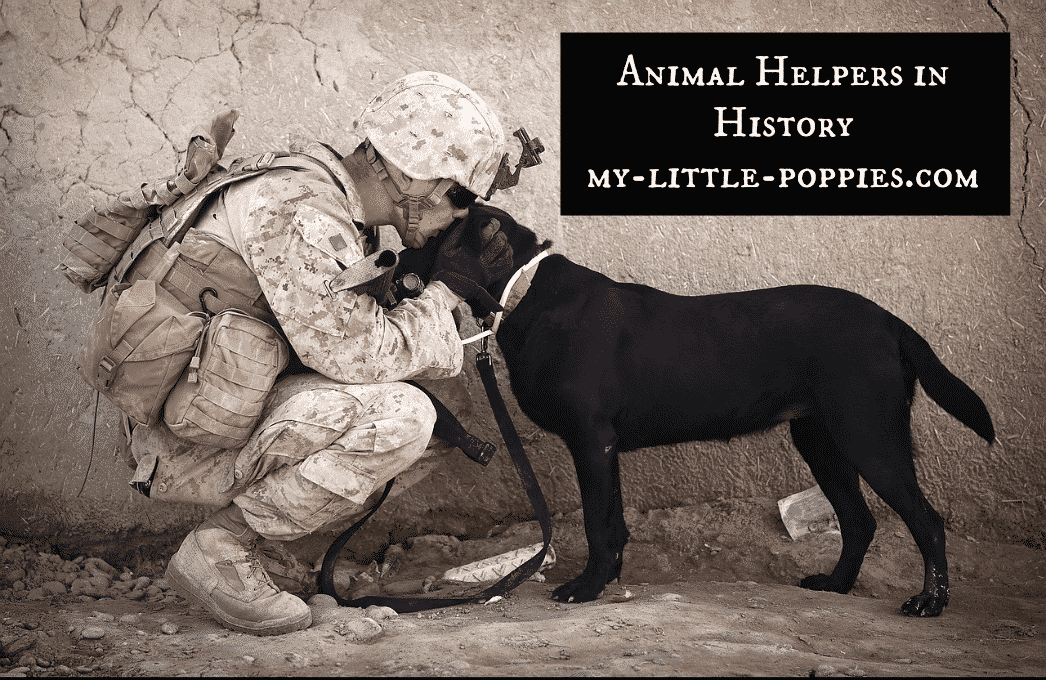 Animal Helpers in History 25 Books About Gratitude to Inspire Kindness at Home