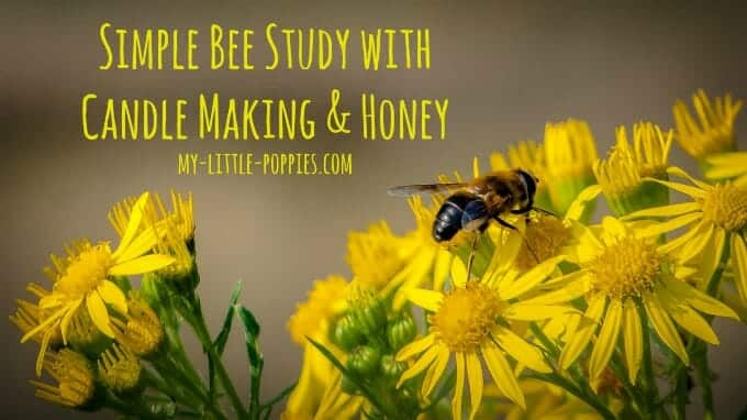 homeschool, homeschooling, bees, unit study, honeybees, wasps, honey, candlemaking, simple bee study with candle making and honey