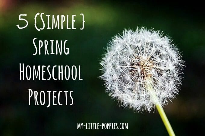homeschool, homeschooling, spring, summer, learning, unit study, projects