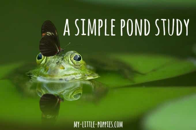 homeschool, homeschooling, nature, pond exploration, unit study, science