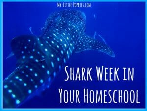 Shark Week in Your Homeschool | My Little Poppies
