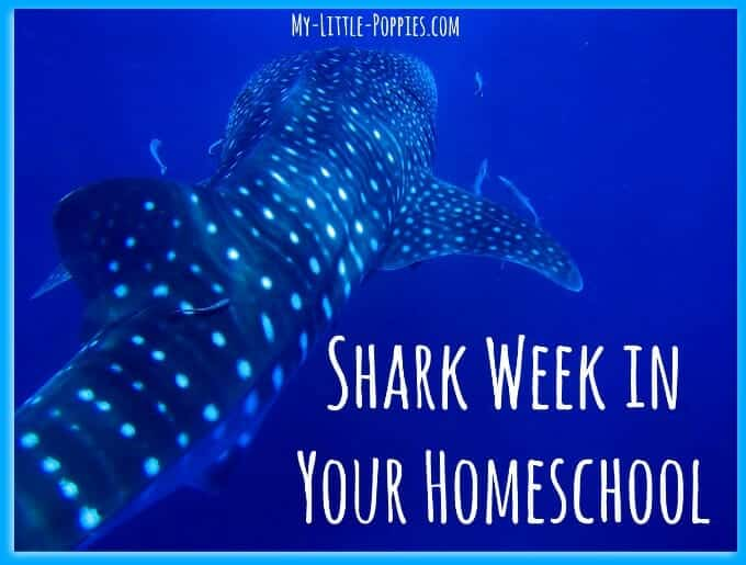 Shark Week in Your Homeschool