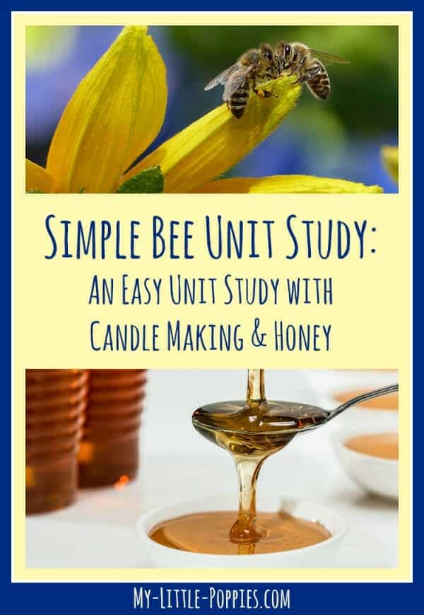 bee, bees, honeybee, candle, A Simple Bee Unit Study with Candle Making and Honey | My Little Poppies