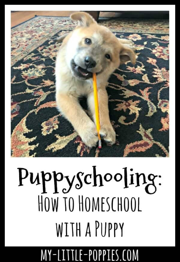 Puppyschooling: How to Homeschool with a Puppy | My Little Poppies
