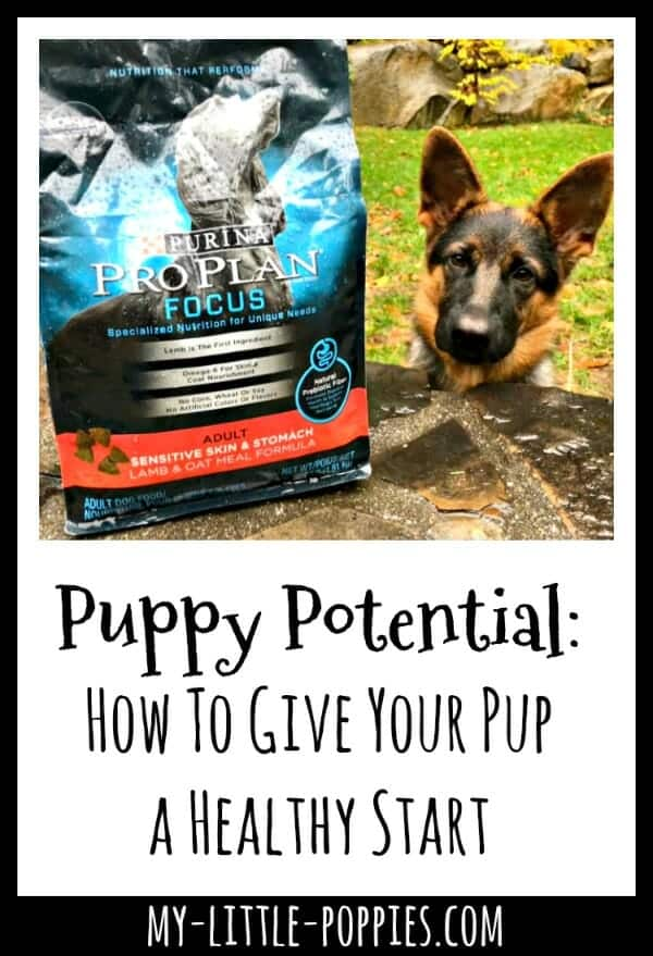 Puppy Potential How To Give Your Pup a Healthy Start My Little Poppies #FuelTheirPotential #shop